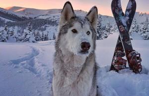 huskydogg
