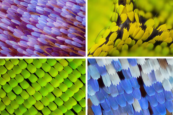 stunning macro photos of butterfly wings 1