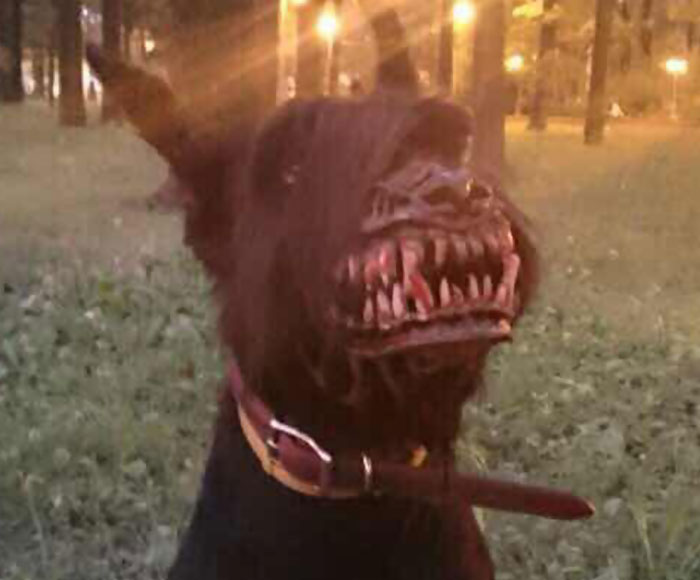 muzzle for dogs 3