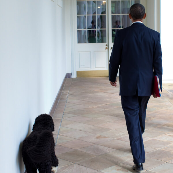 obama's dog pictures 6