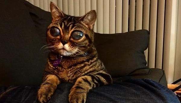 Cat With Really Huge Eyes 1