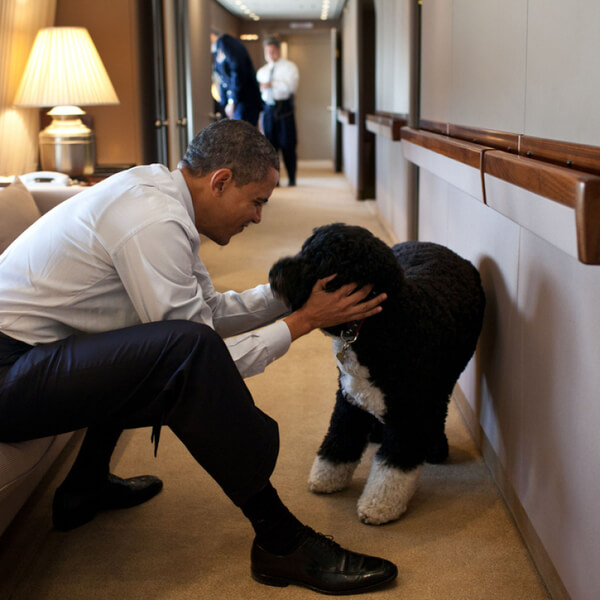 obama's dog pictures 1