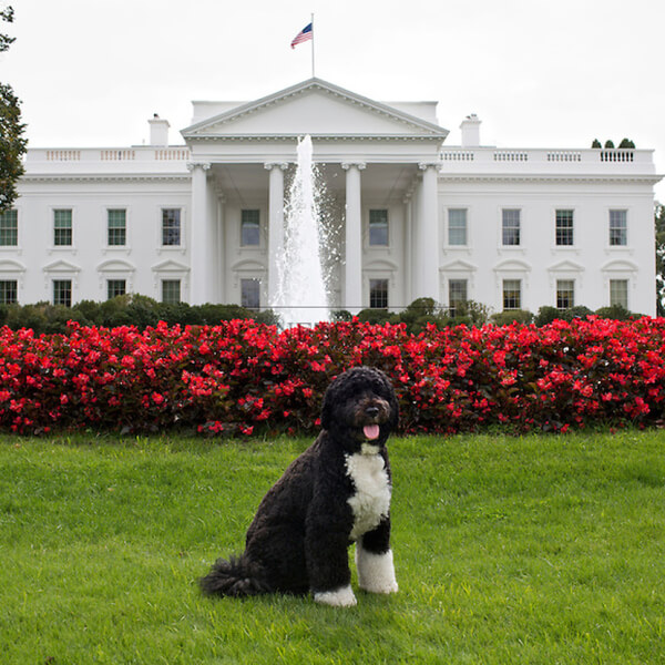 obama's dog pictures 3