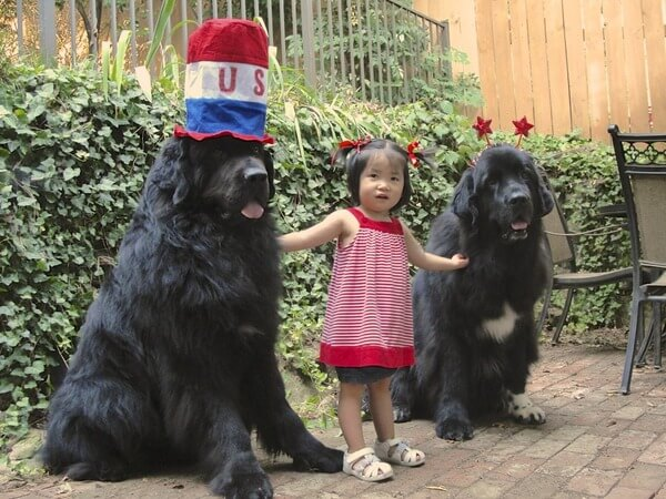 dogs do anything to make kids happy 6