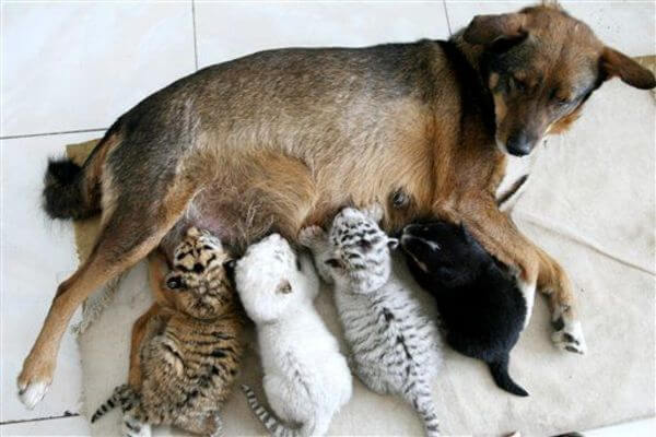 animals with their babies 2
