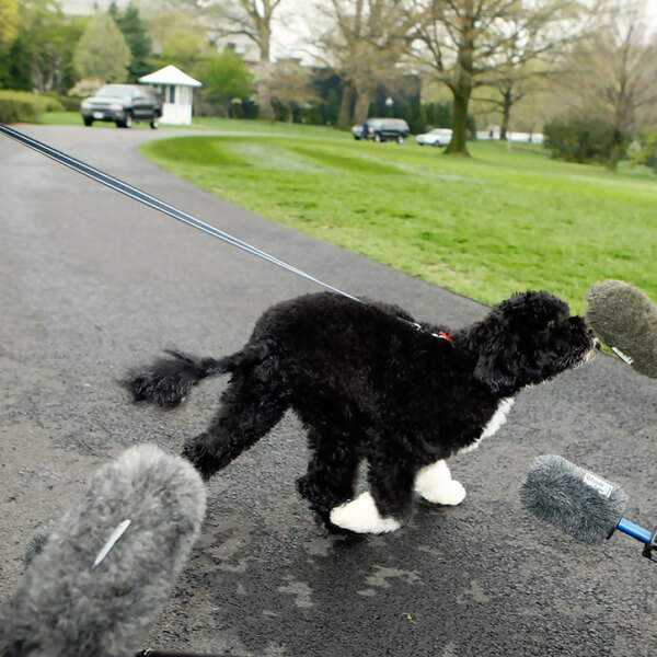 obama's dog pictures 5