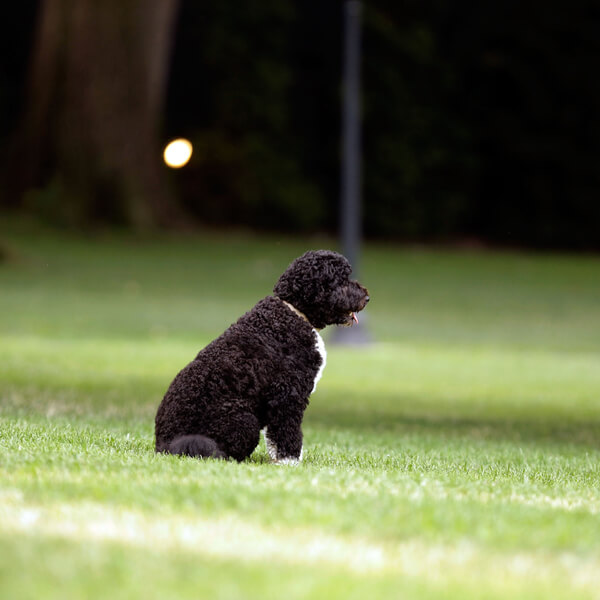 obama's dog pictures 14