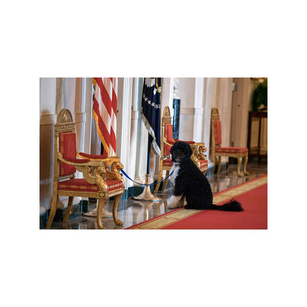 obama's dog pictures 16