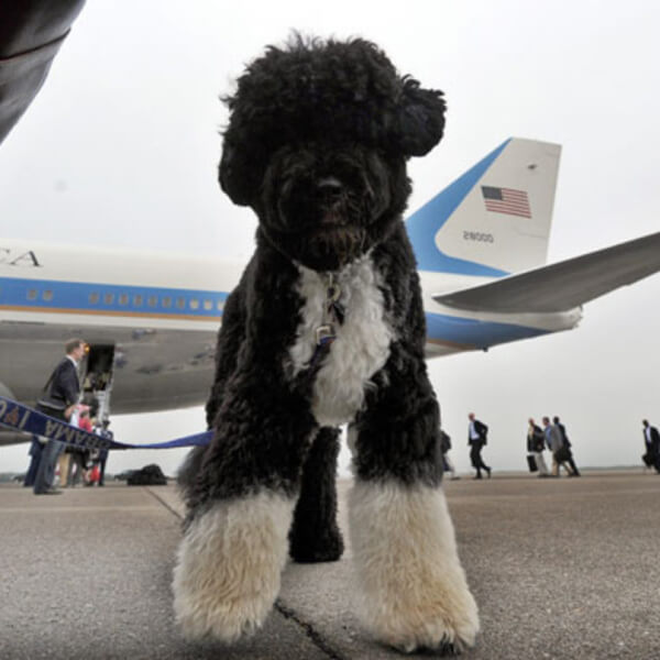 obama's dog pictures 18