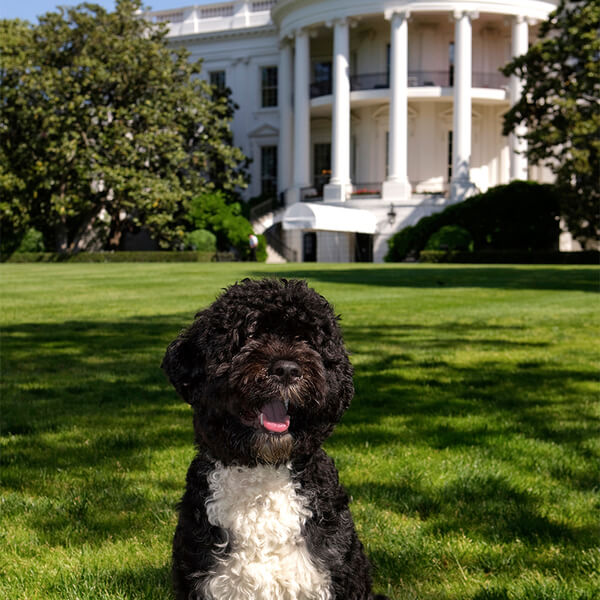obama's dog pictures 2