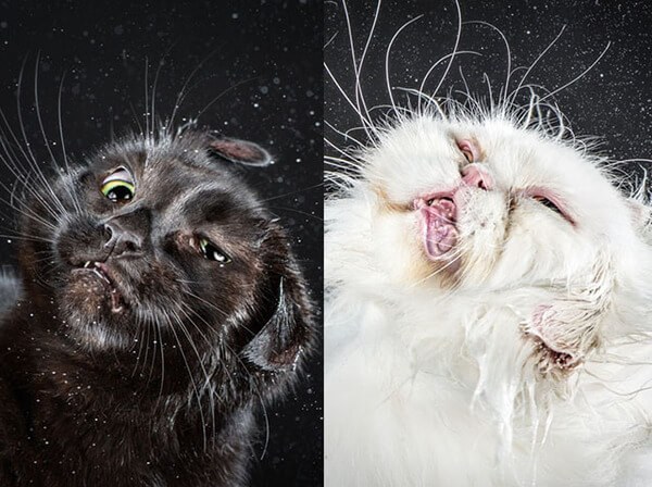 these images of cats shaking themselves clean is basically one huge cat tax