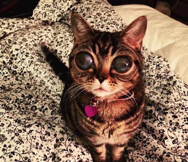 Cat With Really Huge Eyes 2
