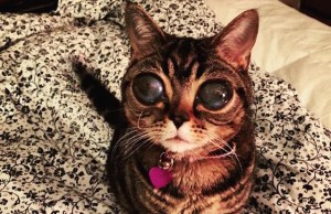 catwithhugeeyes