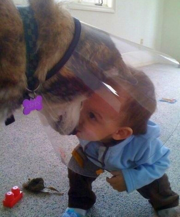 dogs do anything to make kids happy 2