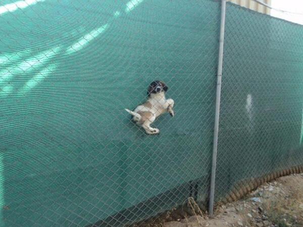 hilarious dog fails 8