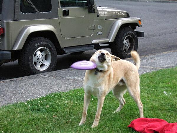 hilarious dog fails 13