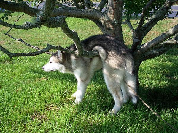 hilarious dog fails 14
