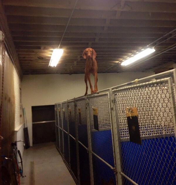 hilarious dog fails 6
