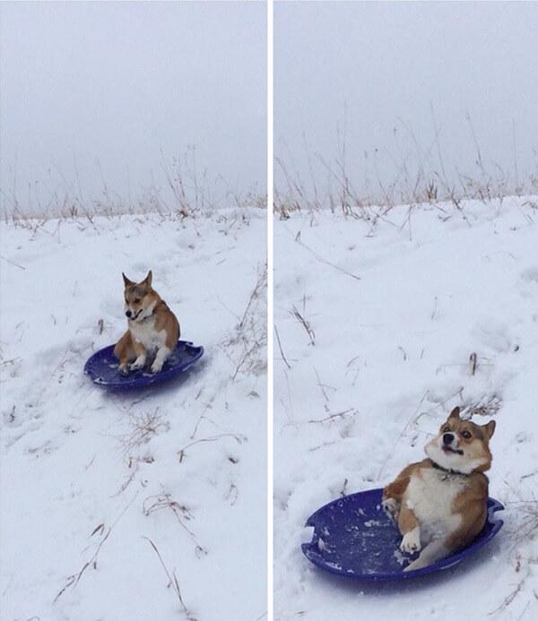 hilarious dog fails 3