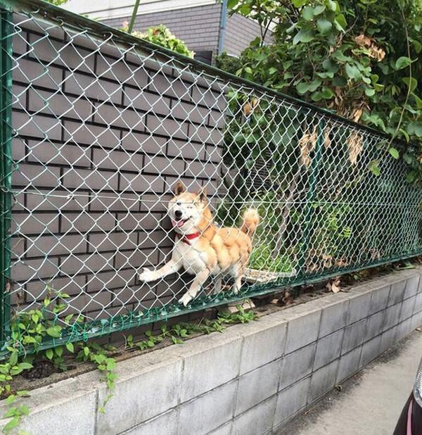 hilarious dog fails 15