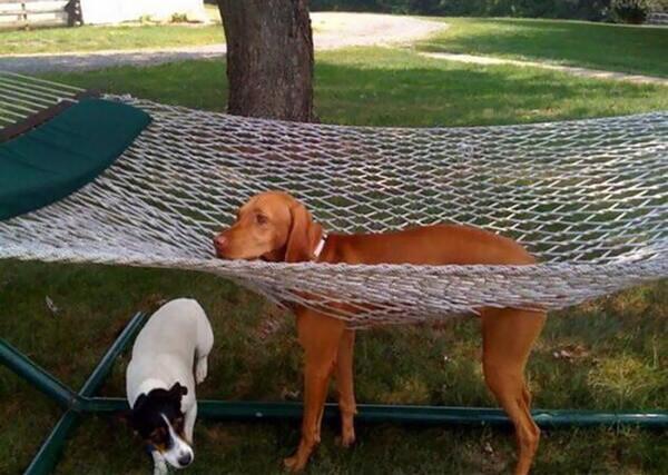 hilarious dog fails 4