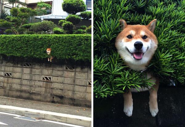 hilarious dog fails 5
