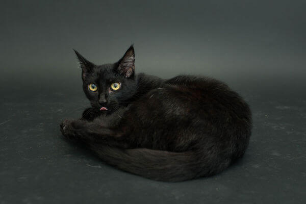 black cats photography 7