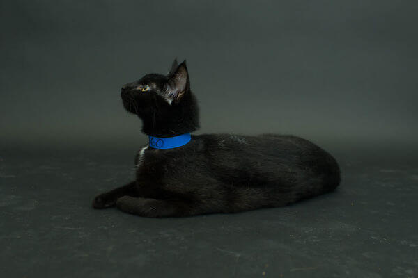 black cats photography 5