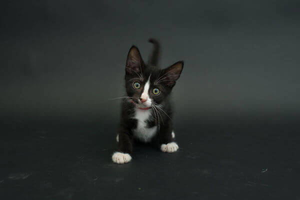 black cats photography 4