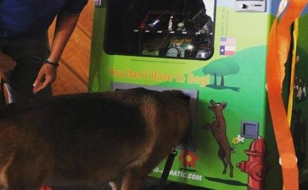 dog vending machine 5