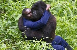 gorilaaa23