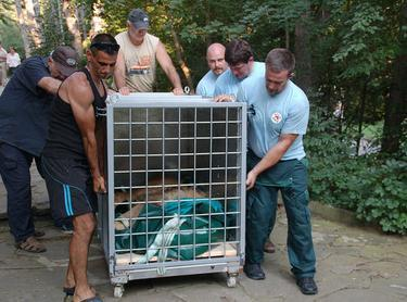 circus lions finally free 5