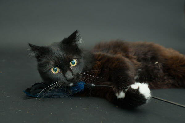 black cats photography 10