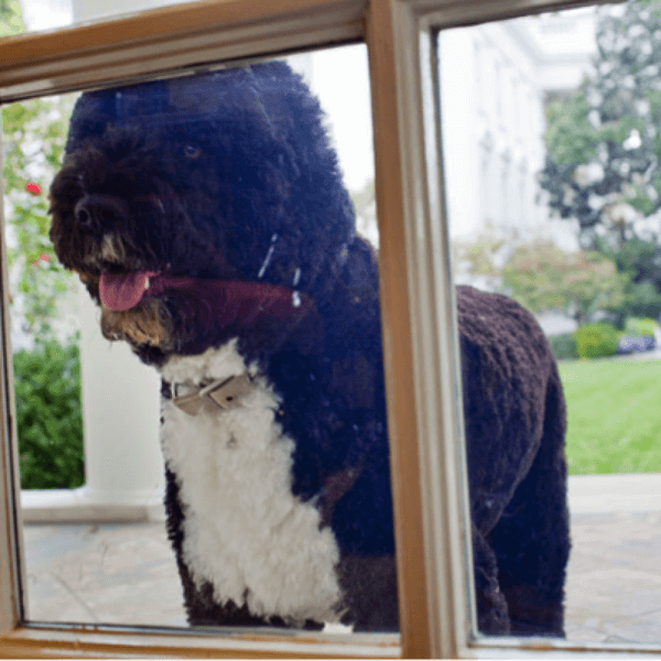 obama's dog pictures 12