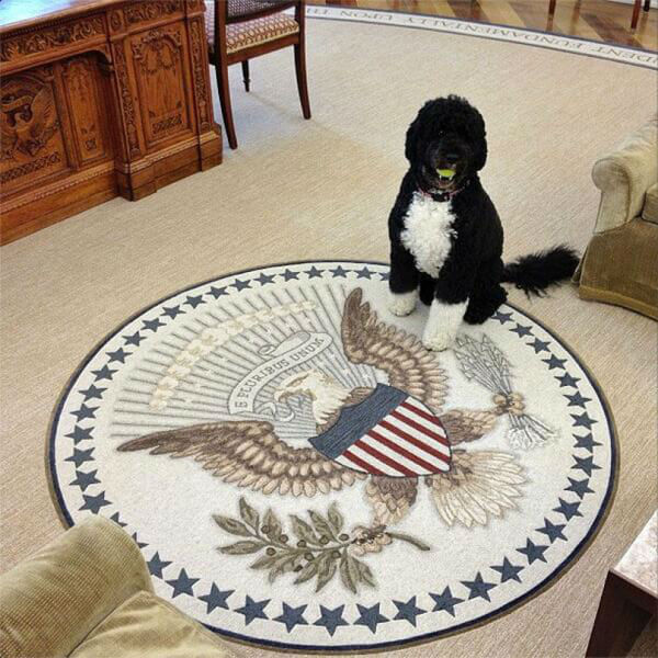 obama's dog pictures 11