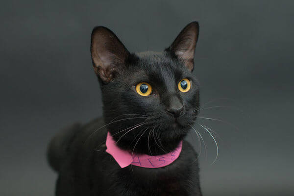 black cats photography 11