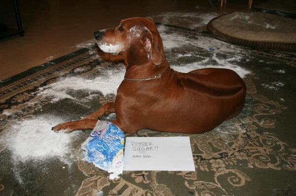 best dog shaming of the year 6