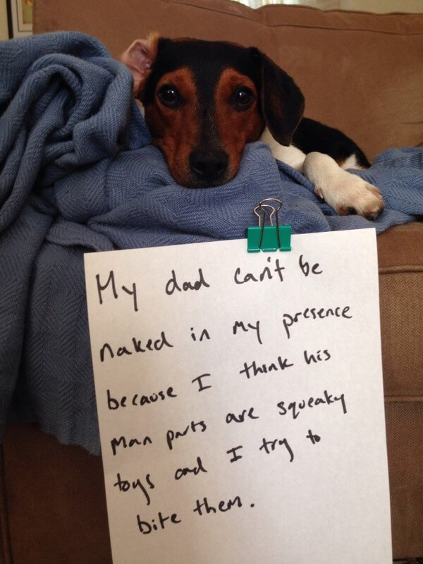 Dogs Who Were So Bad 19