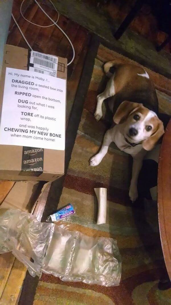 best dog shaming of the year 14