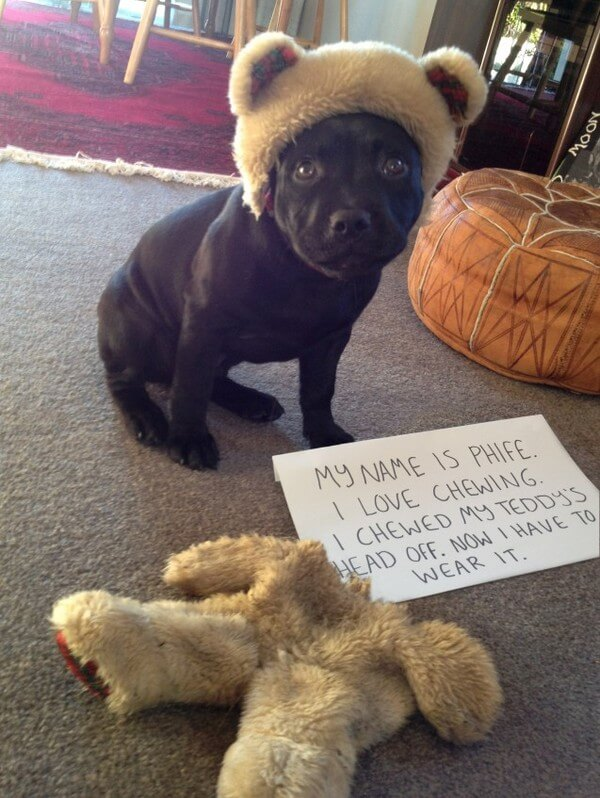 best dog shaming of the year 8