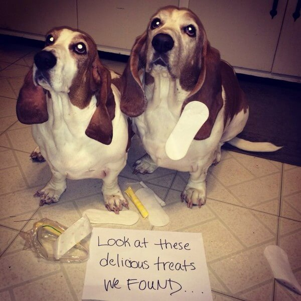 best dog shaming of the year 12