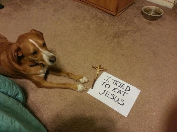 best dog shaming of the year 13