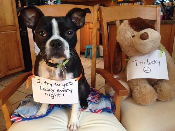 best dog shaming of the year 9