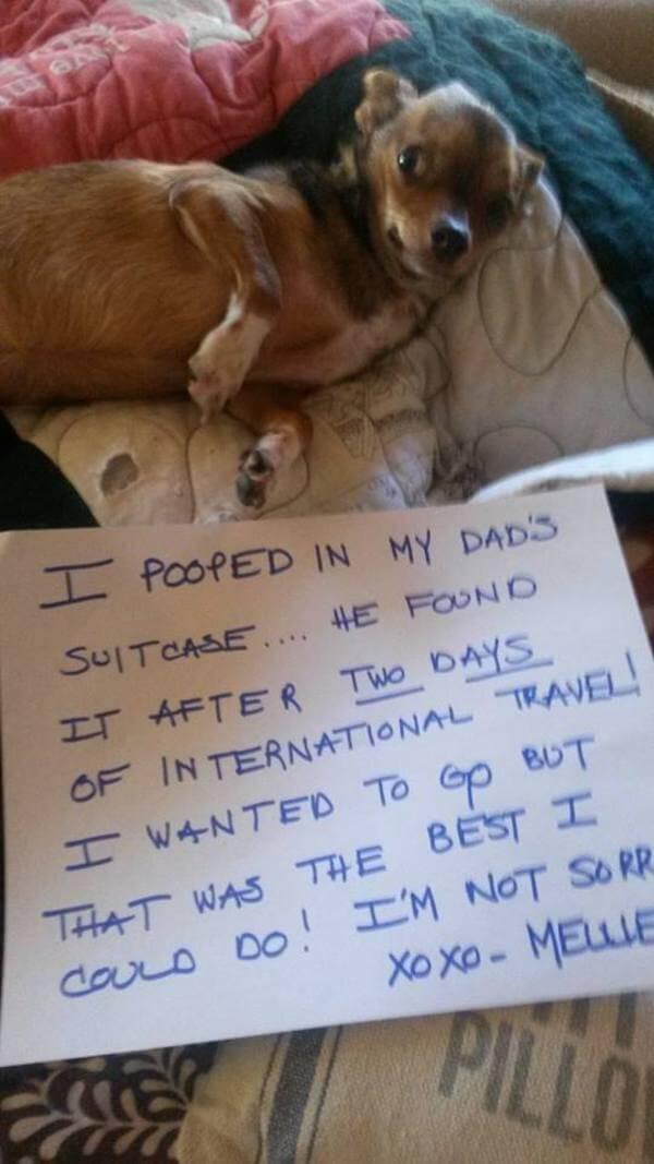 best dog shaming of the year 11