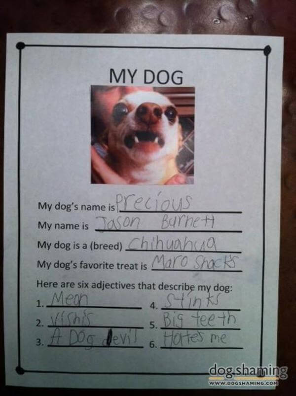 best dog shaming of the year 20