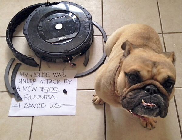 best dog shaming of the year 19