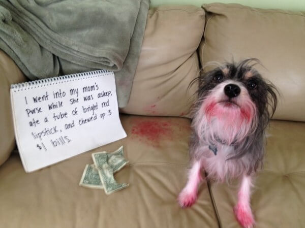 best dog shaming of the year 18