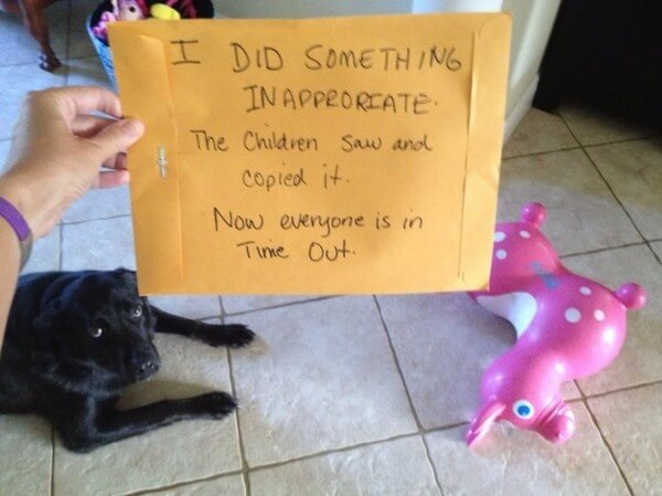 best dog shaming of the year 16