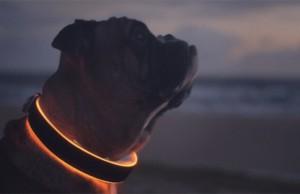 buddy smart collar 2
