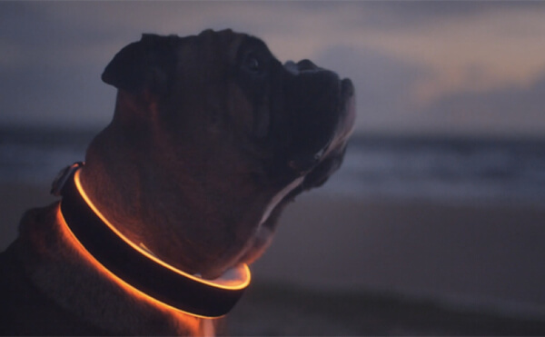 Dog Collar With More Features Than Your Smartphone 2